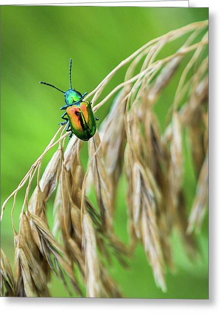 Greeting Card featuring the photograph Mini Metallic Magnificence  by Bill Pevlor