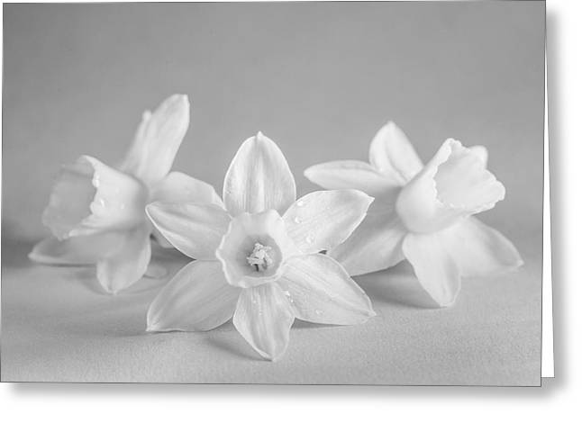 Mini Narcissus Black And White 2 Greeting Card