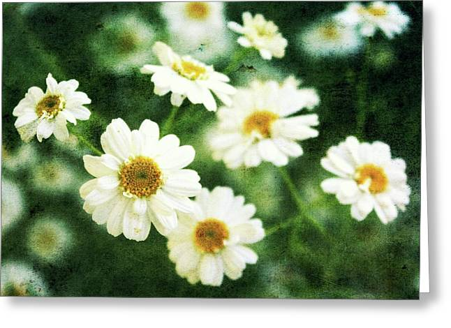 Mini Spring Daisy's Greeting Card by Cathie Tyler