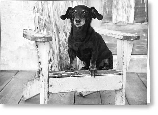 Mini Dachshund Dog Sitting On An Adirondack Chair Greeting Card