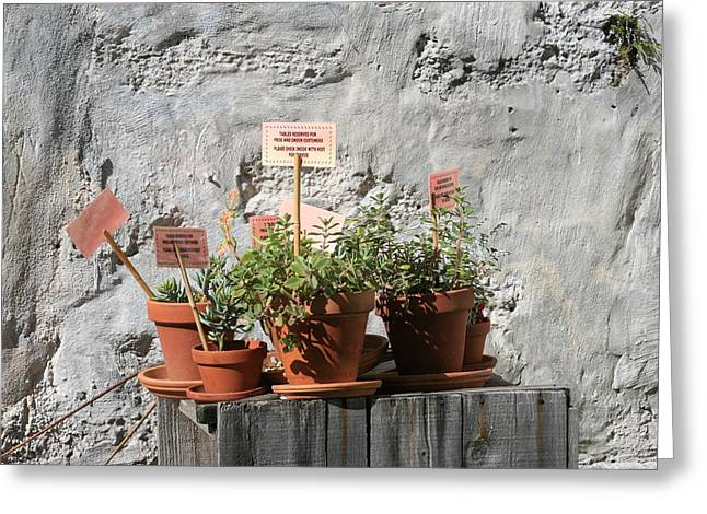 Greeting Card featuring the photograph Miniature Plants For Sale by Shirin Shahram Badie