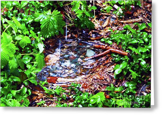 Miniature Pond In Watercolor Greeting Card