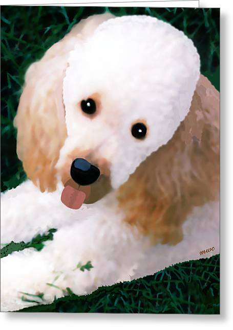 Miniature Poodle Albie Greeting Card