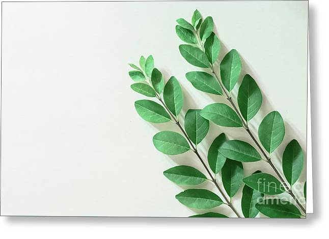 Greeting Card featuring the photograph Minimal Green by Andrea Anderegg