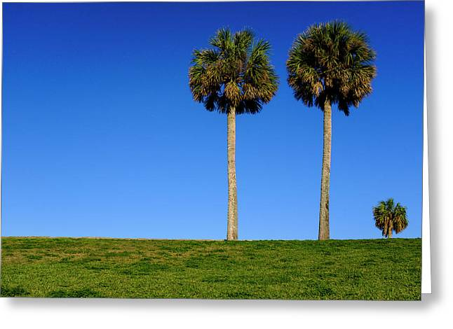 Minimal Palm Trees On A Hill In Saint Augustine Florida Greeting Card