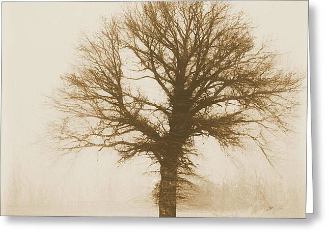 Minimal Winter Tree Greeting Card by Dan Sproul