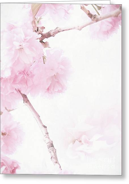 Minimalist Cherry Blossoms Greeting Card