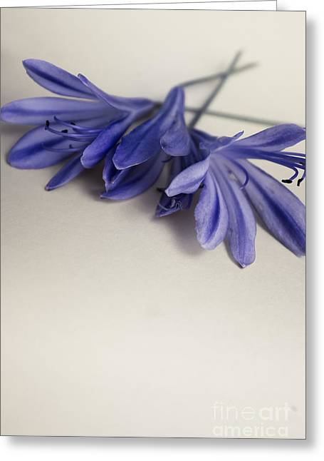 Minimalist Modern Flower Artwork Greeting Card by Jorgo Photography - Wall Art Gallery