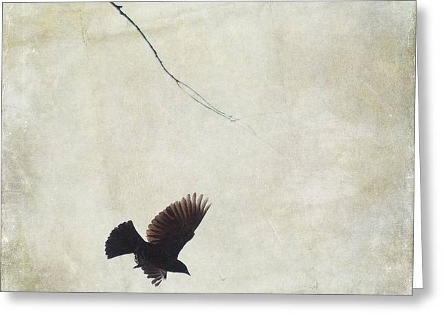 Greeting Card featuring the photograph Minimalistic Bird In Flight  by Aimelle