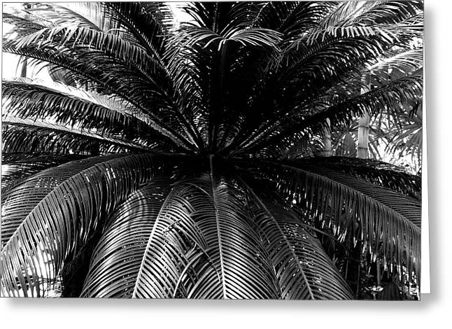 Minnesota Palm Tree  Greeting Card by Will Borden