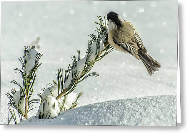 Minus Twenty Three Degree Morning.... Greeting Card