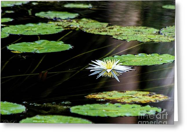 Mirror Lily Greeting Card