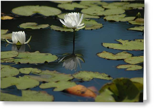 Mirrored Reflections 2 Greeting Card by Devane Mattoni
