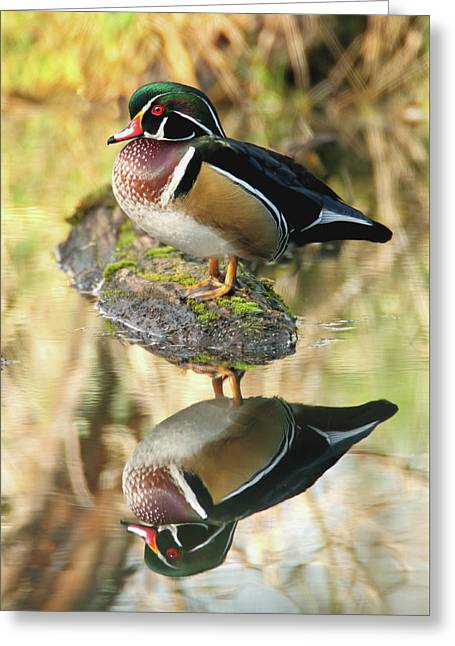 Mirrored Wood Duck Greeting Card