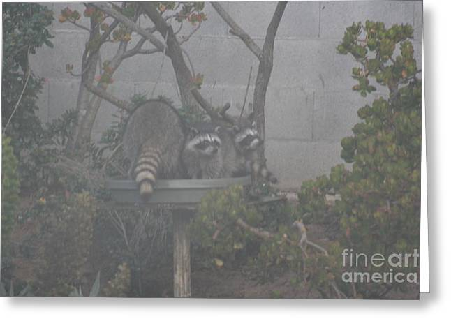Greeting Card featuring the photograph Foggy Day At The Swimming Hole by Cynthia Marcopulos