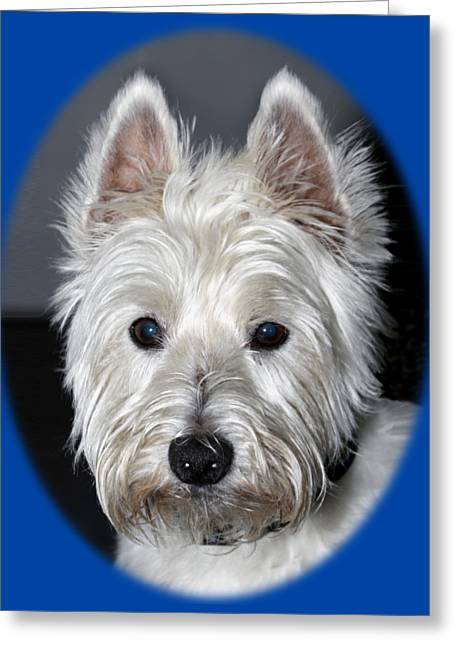 Mischievous Westie Dog Greeting Card