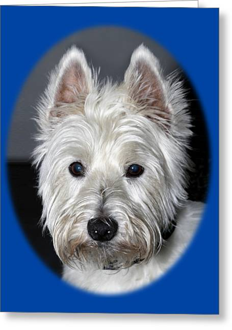 Mischievous Westie Dog Greeting Card by Bob Slitzan
