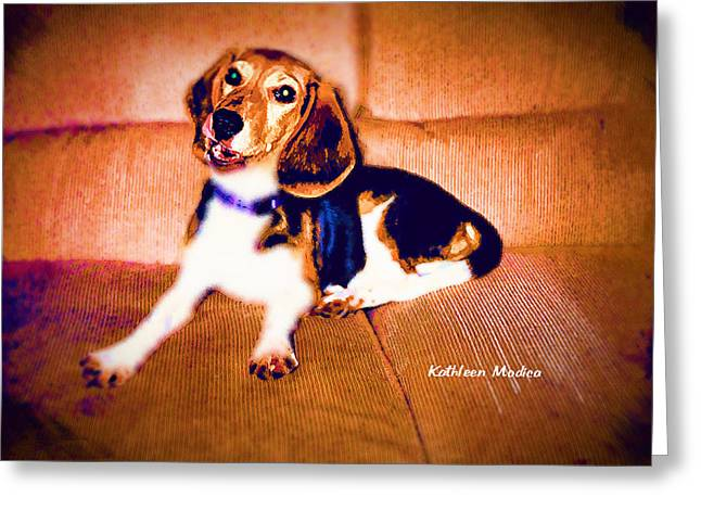 Greeting Card featuring the photograph Mischievous Harley by KLM Kathel