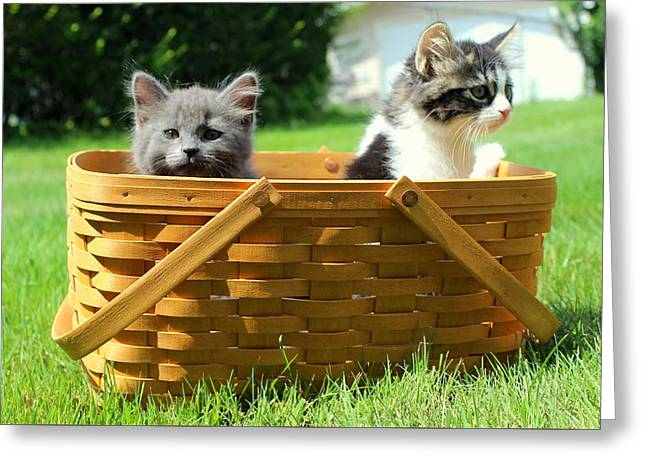 Mischievous Kittens In Basket Greeting Card