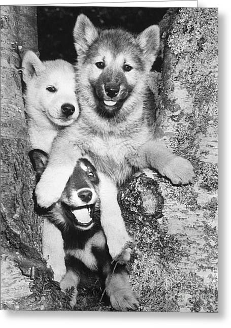 Mischievous Pups Greeting Card by M E Browning