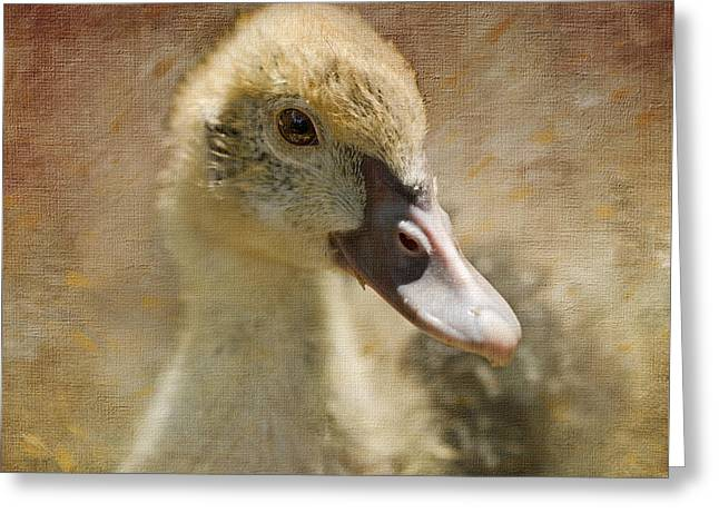 Miss Duck Greeting Card