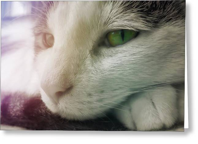 Miss Ginny Greeting Card by JAMART Photography