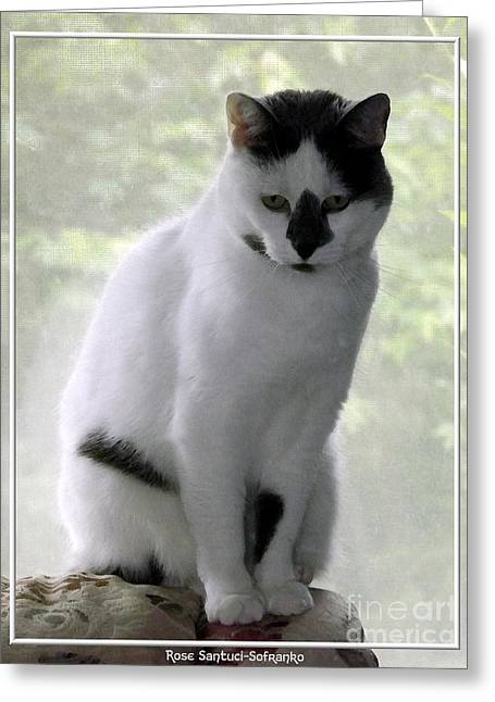 Miss Jerrie Cat With Watercolor Effect Greeting Card