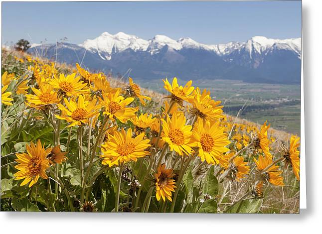 Mission Mountain Balsam Blooms Greeting Card by Jack Bell