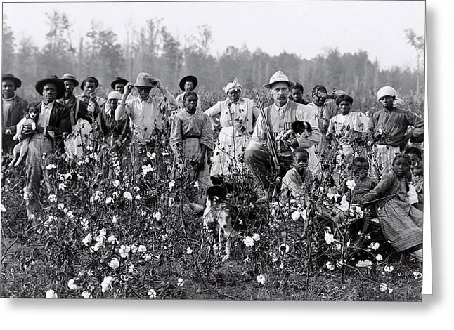 Mississippi Cotton Farmer And Cotton Pickers  1908 Greeting Card by Daniel Hagerman