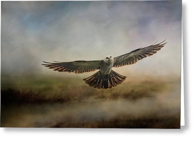 Mississippi Kite In The Marsh Raptor Art Greeting Card