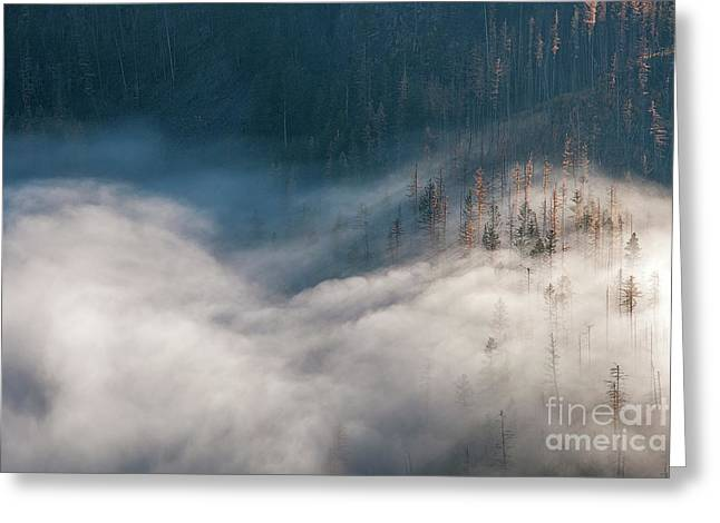 Mist And Shadow Greeting Card