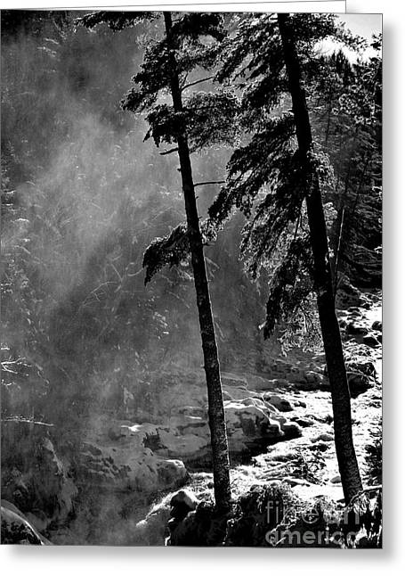 Mist Greeting Card by Elfriede Fulda