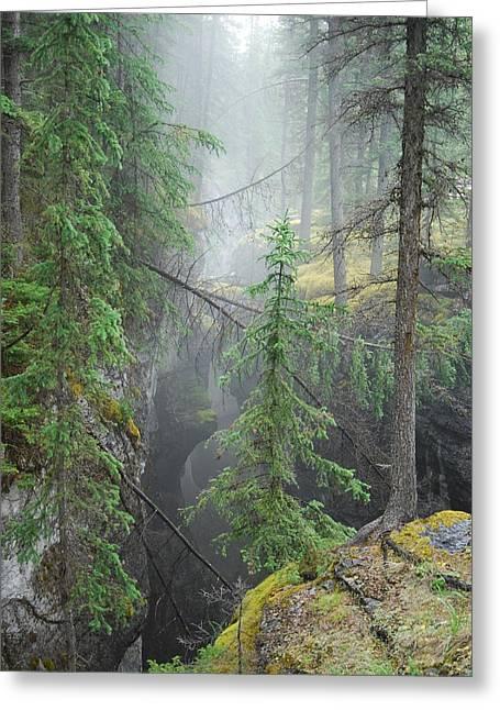 Mist Forest Greeting Card by Kim Blumenstein