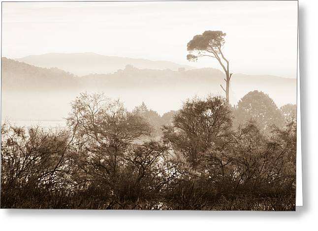 Umbrella Pine Greeting Cards - Mist over Kalogria Greeting Card by Gabriela Insuratelu