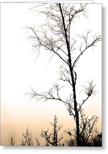 Mist, Trees And Roads Greeting Card