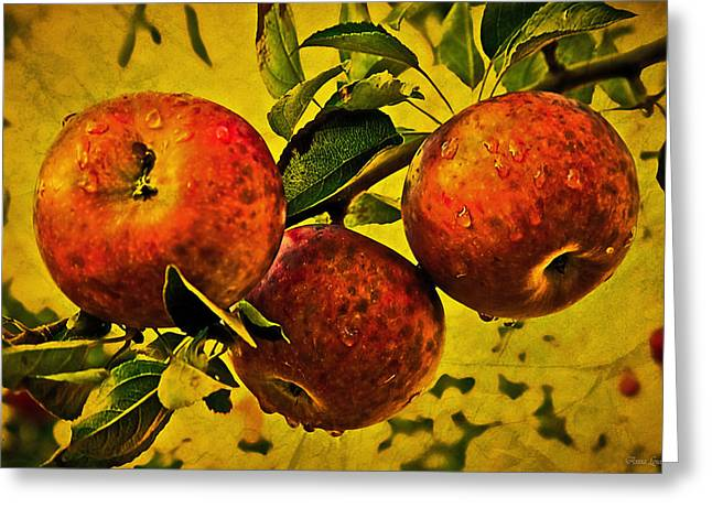 Mister's Apples Greeting Card