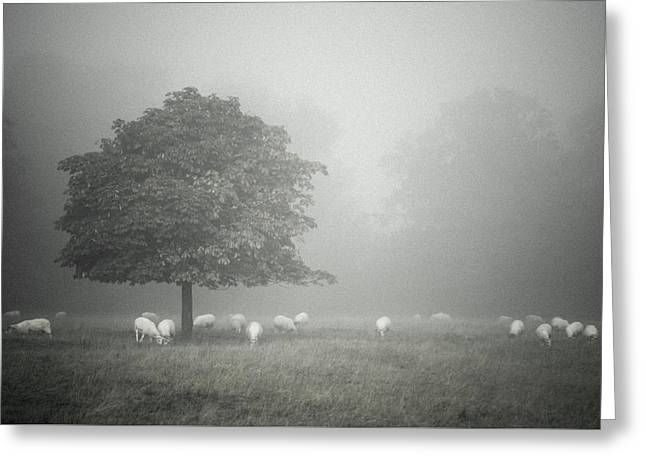 Misty And Muted Greeting Card by Chris Fletcher