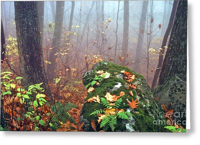 Misty Autumn Woodland Greeting Card by Thomas R Fletcher