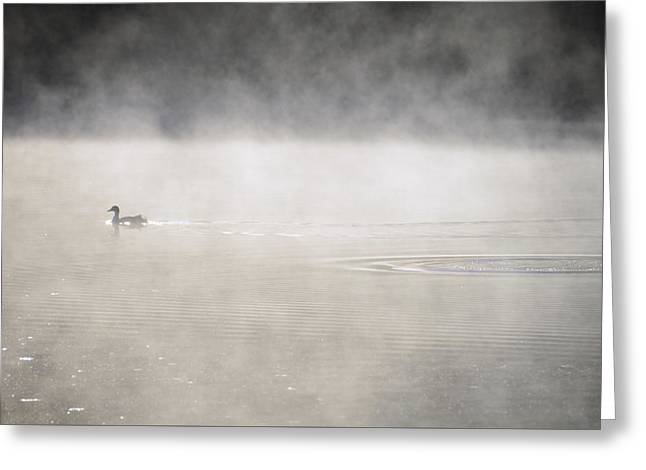 Misty Duck Greeting Card
