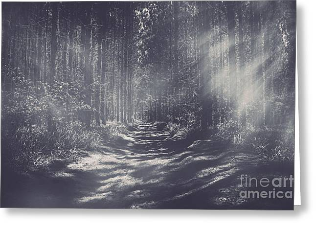Misty Enchanted Pine Forest Greeting Card by Jorgo Photography - Wall Art Gallery