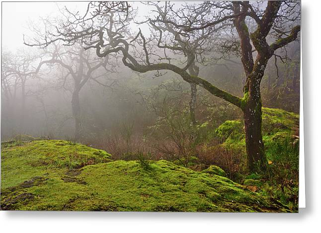 Misty Forest Greeting Card by Keith Boone