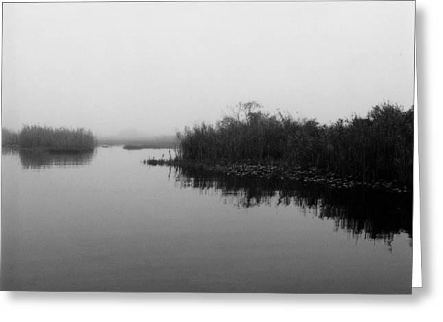 Misty Glades Greeting Card by Cindy Gregg