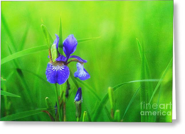 Misty Iris Greeting Card