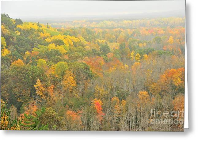 Misty Manistee River Valley Greeting Card