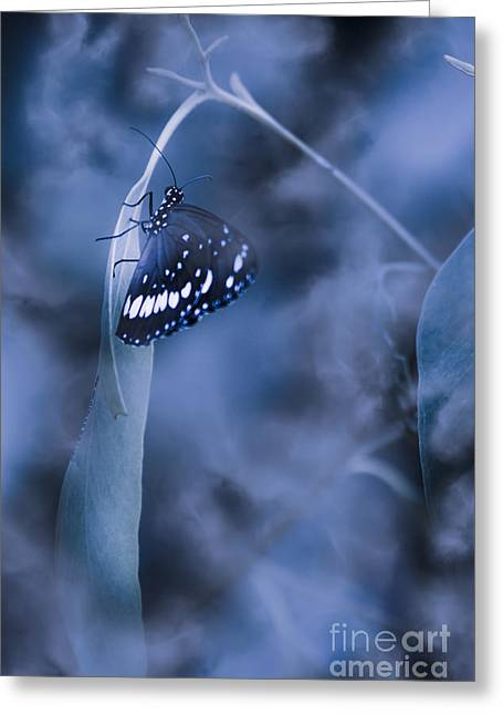 Misty Moonlight Butterfly In Blue Twilight Forest Greeting Card by Jorgo Photography - Wall Art Gallery