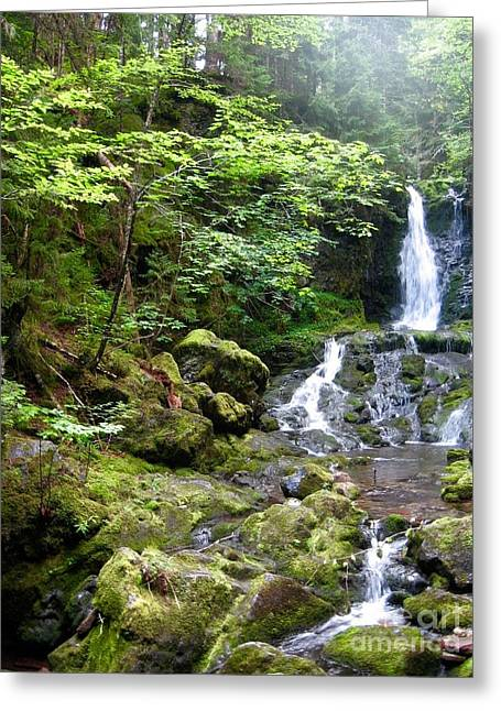 Misty Morning Falls On Hiking Trail At Fundy Park's Laverty Falls Greeting Card by Sylvie Marie