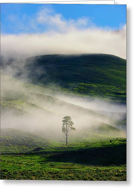 Greeting Card featuring the photograph Misty Morning by Greg Norrell
