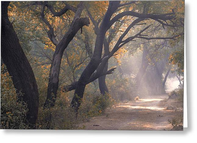 Greeting Card featuring the photograph Misty Morning, Bharatpur, 2005 by Hitendra SINKAR
