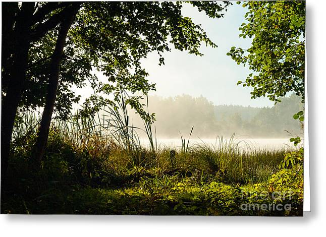 Misty Morning Light Greeting Card