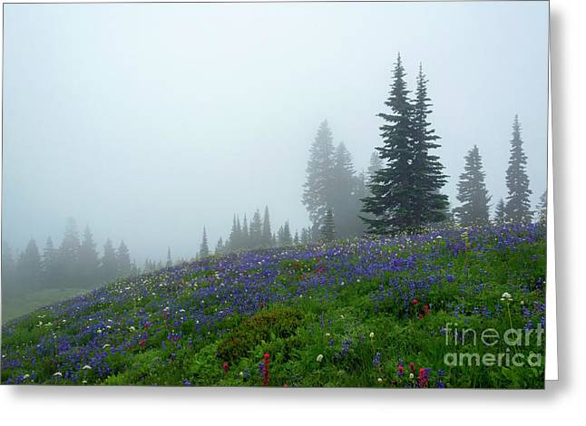 Misty Morning Meadow Greeting Card by Mike Dawson